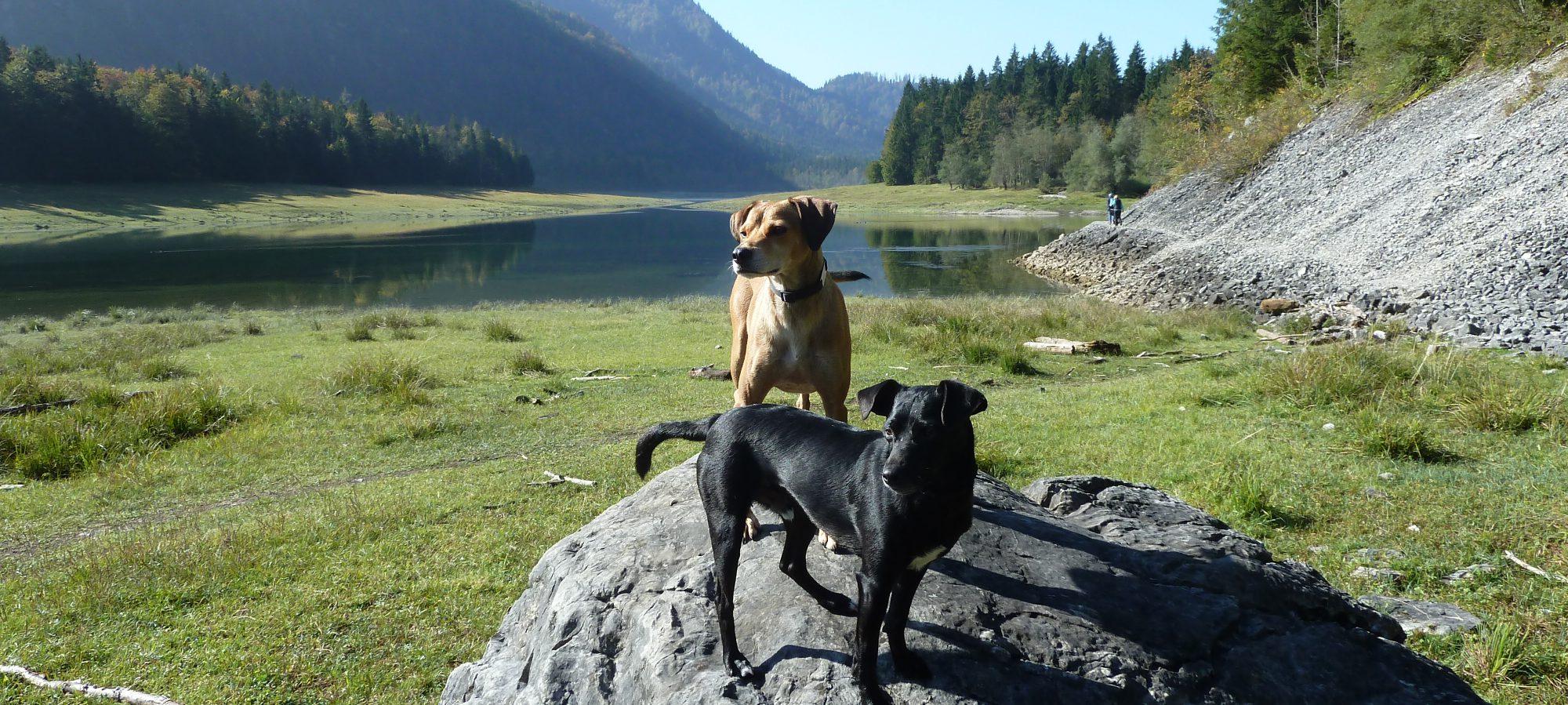 Nomadic-Dogs